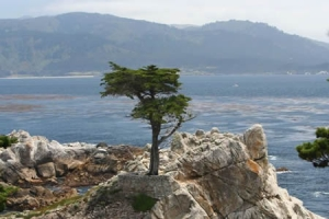 lone cypress pebble beach